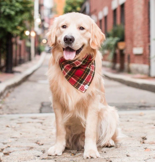 Chewy: 5%-60% OFF Pet Apparel